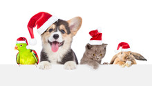 Group Of Pets In Red Christmas...