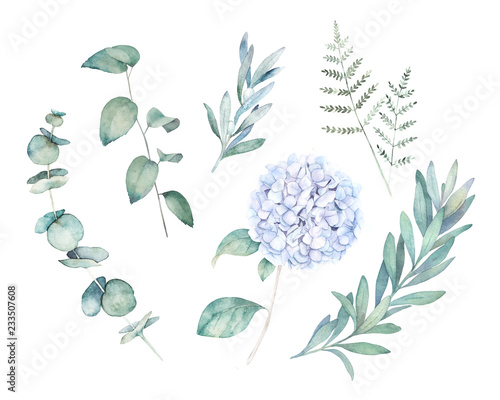 Fototapety, obrazy: Watercolor greenery set. Botanical  winter illustration with eucalyptus branch and blue hydrangea. Vintage hand drawn plant