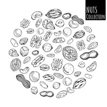 Group Of Vector Illustrations On The Nutrition Theme; Set Of Different Kinds Of Nuts. Realistic Isolated Objects For Your Design.