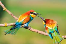 Colored Bird Touching The Beak