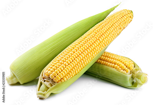 Ears of corn (Corncob) isolated on white background. Full depth of field.