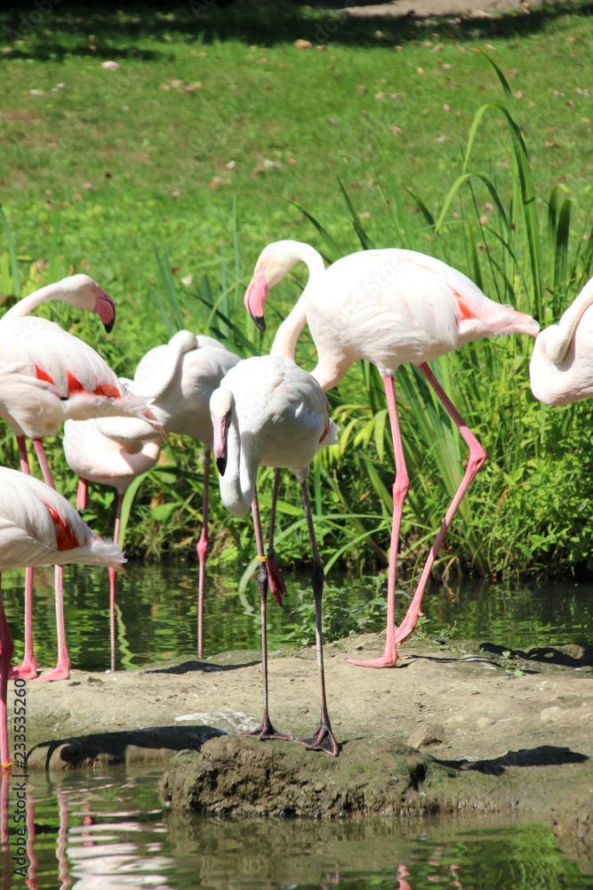 Flamingos in der Gruppe