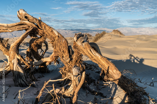 Fotografie, Obraz  Twisted Dry Trunk of a Mesquite Tree at Sunrise, Mesquite Flat Dunes, Death Vall