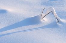 Fresh Newly Fallen Snow Coveri...