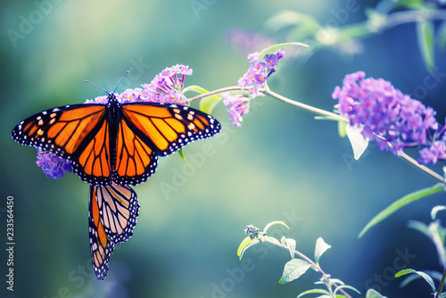 Butterfly on a lilac flower Wallpaper Mural