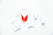 Close Up Red Bird Flying Different Through A Group Of White Bird,Leadership Concept.