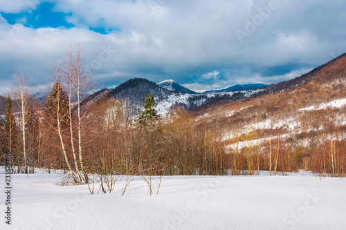 Spoed Foto op Canvas Cappuccino winter landscape of Uzhanian National Nature Park. leafless birch trees on slopes. high mountain with snowy peak in the distance
