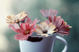 Fototapeta Kwiaty - Kolorowe kwiaty w filiżance