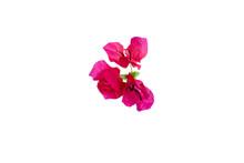 Beautiful Red Bougainvillea Fl...