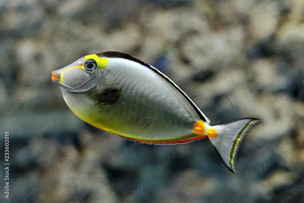 Fototapeta Exotic fish in a marine aquarium