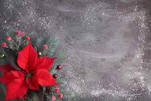 Christmas Flower Poinsettia An...