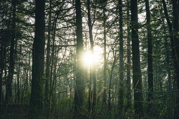 Oregon Woods