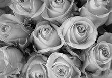 MY MINI GARDEN - Flowers