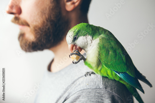 Beautiful green Monk paraquat is holding bread with his paw and is eating it while sitting on beard men shoulder. Human is having domesticated Quaker parrot.