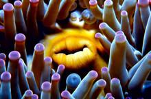 Close-up Of Sea Anemone