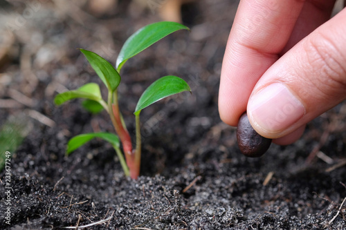 фотография  Hand of man planting a seed in soil agriculture