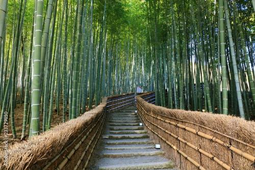 Foto op Canvas Bamboo 京都の竹林
