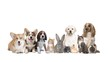 pets on on white background