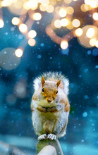 Christmas Banner Background; Cute Squirrel In Winter Garden;