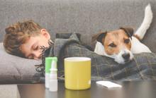 Dog Guarding Sick Boy Sleeping On Sofa Under Plaid