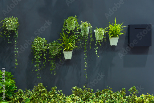 Montage in der Fensternische Pflanzen Natural green tree plant in pot on the gray wall interior decoration contemporary