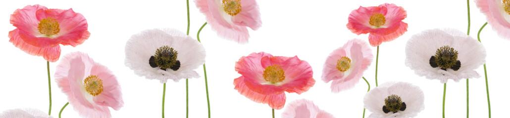Panel Szklany Kwiaty Panoramik Gelincik Çiçekleri