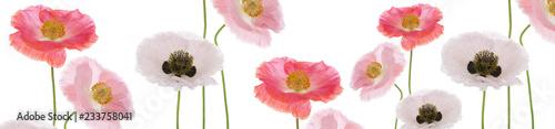 Foto  Panoramik Gelincik Çiçekleri