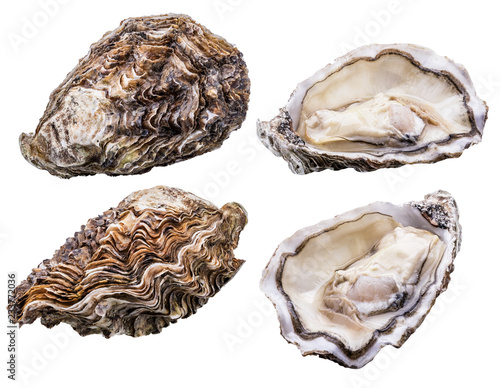 Fotografija Fresh oyster isolated with shadow. Clipping path.