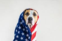 American Patriotic Dog Concept...
