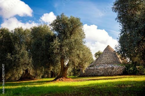 Fotografie, Obraz Trulli with olive grove. Val d'Itria - Puglia (Apulia) - Italy
