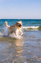 Dog Playing In The Beach