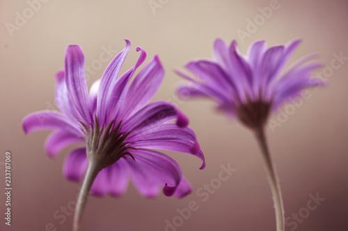 Obraz Fioletowe kwiaty - fototapety do salonu