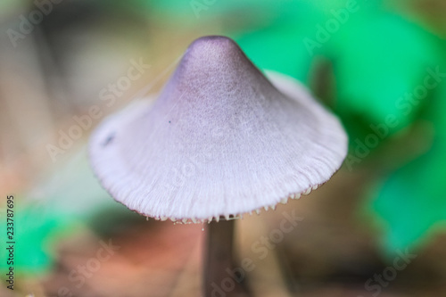 Agaricus mushroom isolated on bokeh green background Canvas Print