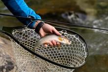 Fisherman Holding Fish On Hand