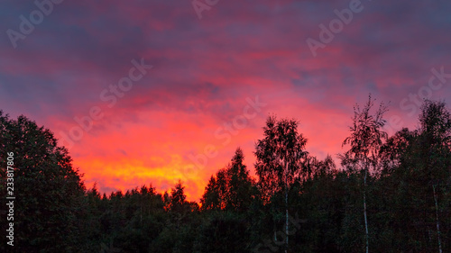 Foto op Plexiglas Crimson Colorful sunset in the cloudy sky above the green forest
