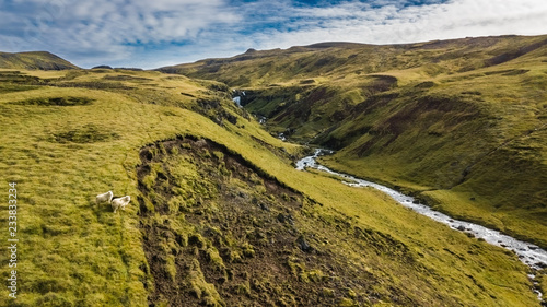 Cuadros en Lienzo Drone view of an icelandic landscape with two sheep posing for the camera