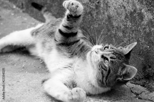 Photo  playful cat