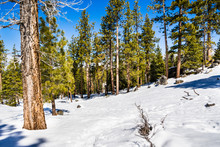 Winter Landscape In Van Sickle Bi-State Park; South Lake Tahoe, California