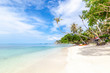Beautiful tropical delightful extraordinary bright paradise landscape, white sand and palm trees,