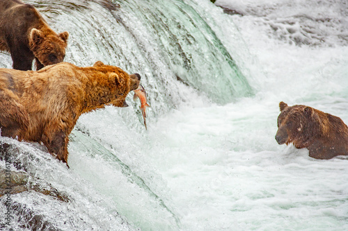 Grizzly bears fishing for salmon at Brooks Falls, Katmai NP, Alaska Fototapet