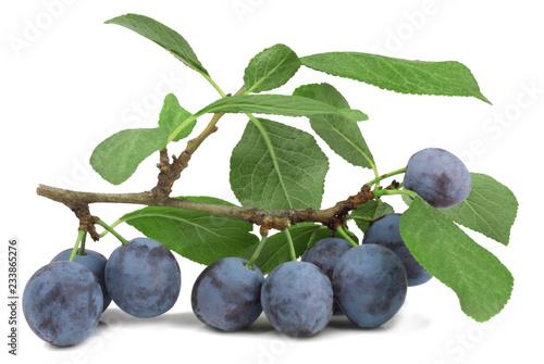 Valokuva  The fruits of blackthorns isolated on white, macro