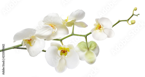Autocollant pour porte Orchidée White orchid isolated on white