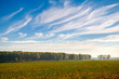 canvas print picture - beautiful sky, field and forest in far in autumn season, bright sunlight and cirrus clouds