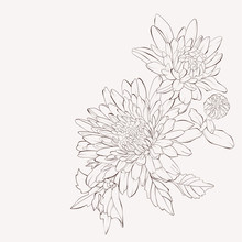 Vector Dahlia Flower. Autumn Flowers Bouquet.  Element For Design. Sketch Hand-drawn Contour Lines And Strokes.