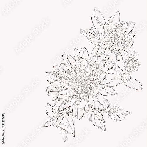 Vector dahlia flower Fotobehang
