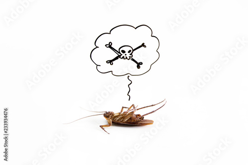 Dead cockroach on floor with drawing of dead sign