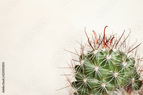 Spines of Cactus on a beige background. Macro.