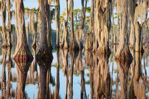 Foto  Cypress Trees, Banks Lake, GA