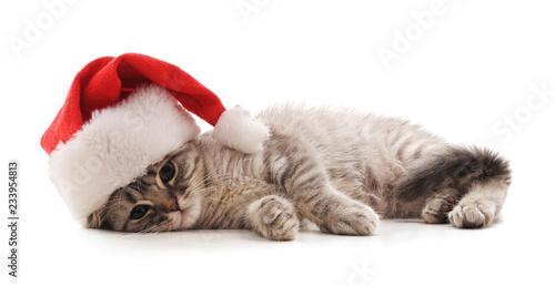 Fotografía  Kitten in the hat Santa.