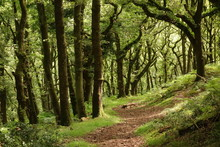 Exmoor Magical Forest, Tunnel ...